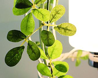 aromapatioアロマパティオLT3684の詳細画像2