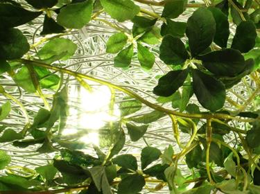 OrlandオーランドペンダントLP3006の照明詳細画像2
